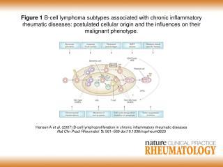 Hansen A et al . (2007) B-cell lymphoproliferation in chronic inflammatory rheumatic diseases
