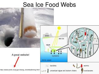 Sea Ice Food Webs