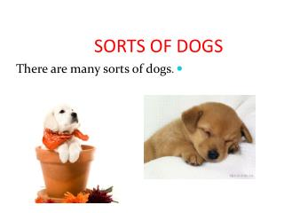 SORTS OF DOGS