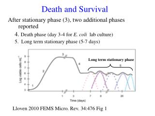 After stationary phase (3), two additional phases reported