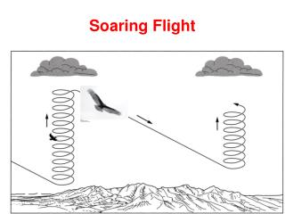Soaring Flight