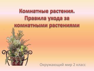 Комнатные растения. Правила ухода за комнатными растениями