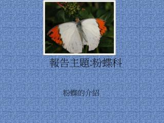 報告主題 : 粉蝶科