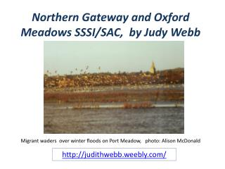 Northern Gateway and Oxford Meadows SSSI/SAC, by Judy Webb