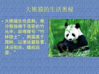 大熊猫的生活奥秘