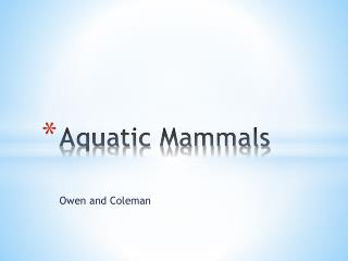 Aquatic Mammals