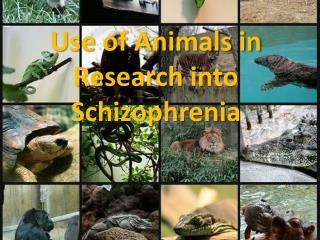 Use of Animals in Research into Schizophrenia