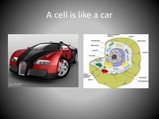 A cell is like a car