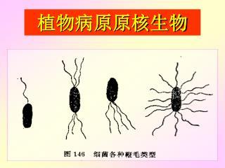 植物病原原核生物