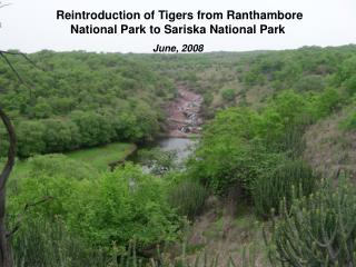 Reintroduction of Tigers from Ranthambore National Park to Sariska National Park  June, 2008