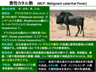 悪性カタル熱 (MCF: Malignant catarrhal Fever)