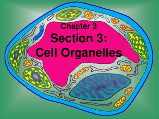 Chapter 3 Section 3:  Cell Organelles