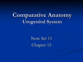 Comparative Anatomy Urogenital System