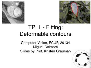 TP11  - Fitting: Deformable contours
