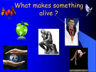 What makes something alive
