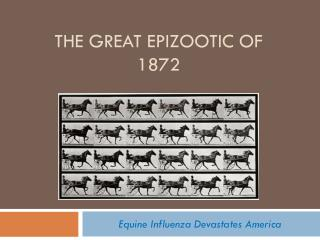 The great epizootic of 1872