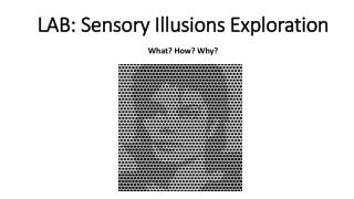 LAB: Sensory Illusions  E xploration