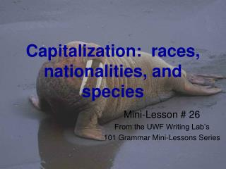 Capitalization: races, nationalities, and species