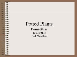 Potted Plants Poinsettias Topic #2173 Nick Wendling