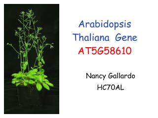Arabidopsis Thaliana  Gene AT5G58610