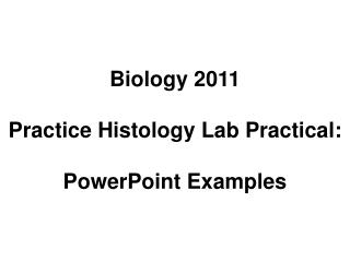 Biology 2011 Practice Histology Lab Practical: PowerPoint Examples