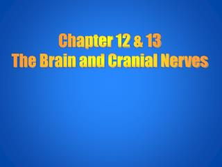 Chapter 12 & 13 The Brain and Cranial Nerves