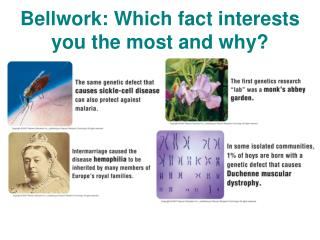 Bellwork : Which fact interests you the most and why?