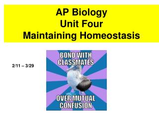 AP Biology  Unit Four Maintaining Homeostasis