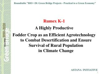 Rumex K-1  A Highly Productive
