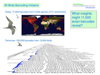 Today: 11,000 barcodes from 2,038 species (21% world birds)