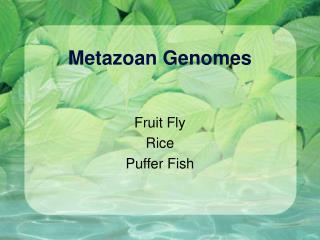 Metazoan Genomes