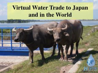 Virtual Water Trade to Japan  and in the World