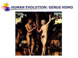 HUMAN EVOLUTION: GENUS HOMO