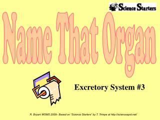 Excretory System #3