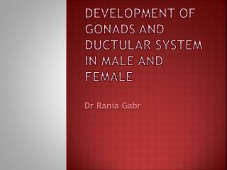 Development of gonads and  ductular  system in male and female