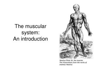 The muscular system:  An introduction