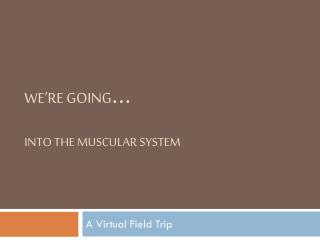 We're going … Into the Muscular System