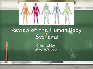 Review of the Human Body Systems