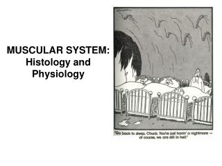 MUSCULAR SYSTEM:  Histology and Physiology