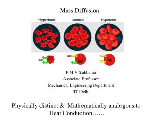 Mass Diffusion