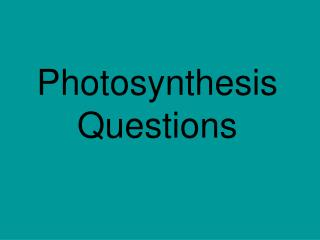 Photosynthesis Questions