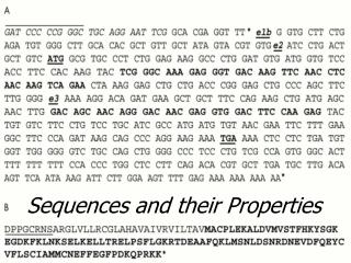 Sequences and their Properties