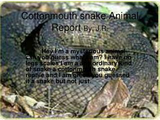 Cottonmouth snake Animal Report  By; J.R.