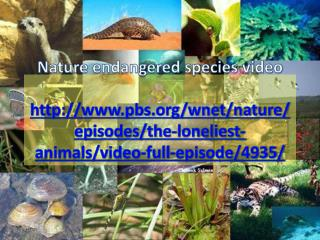 nature endangered species video
