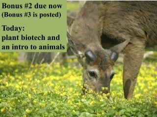 Bonus #2 due now (Bonus #3 is posted) Today: plant biotech and an intro to animals