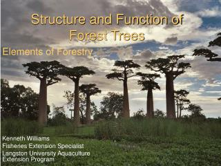 Structure and Function of Forest Trees