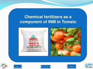 Chemical fertilizers as a component of INM in Tomato