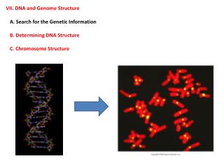 VII. DNA and Genome Structure    A. Search for the Genetic Information
