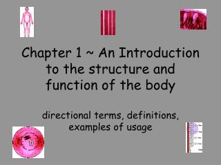 Chapter 1 ~ An Introduction to the structure and  function of the body