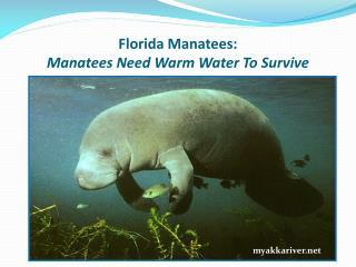 Florida Manatees: Manatees Need Warm Water To Survive